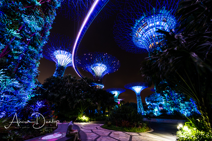 Singapore Places to See - Supertree Grove - Gardens by the Bay at Night