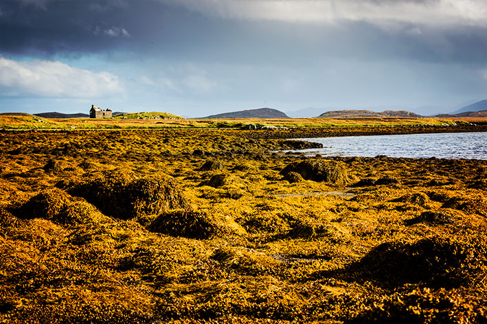 Seaweed Gold, Loch Ceann - Isle of Lewis landscape by a documentary photographer